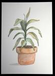 nicky-johnston-illustration-52 week-challenge-childhood-original-artwork-pot-plant