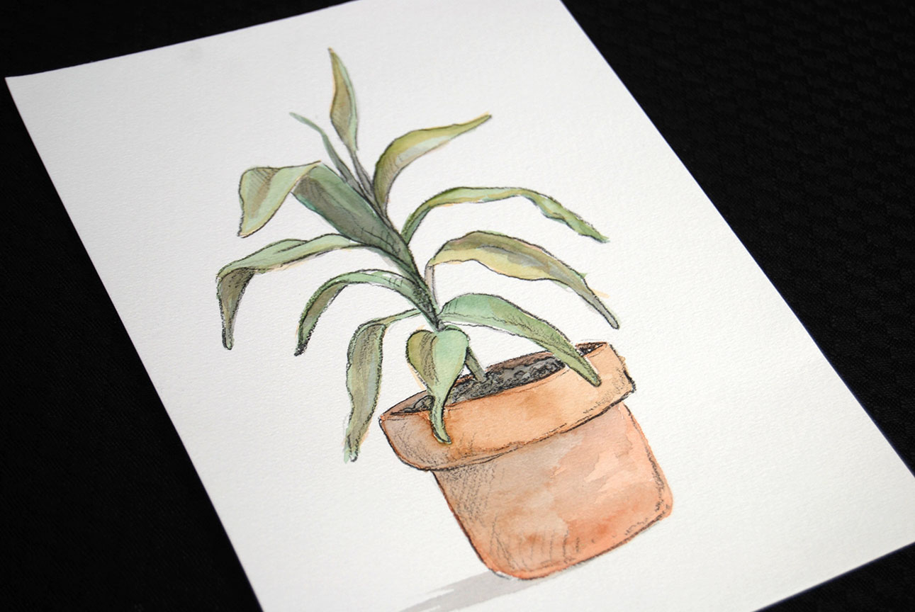 nicky-johnston-illustration-52 week-challenge-childhood-original-artwork-pot-plant