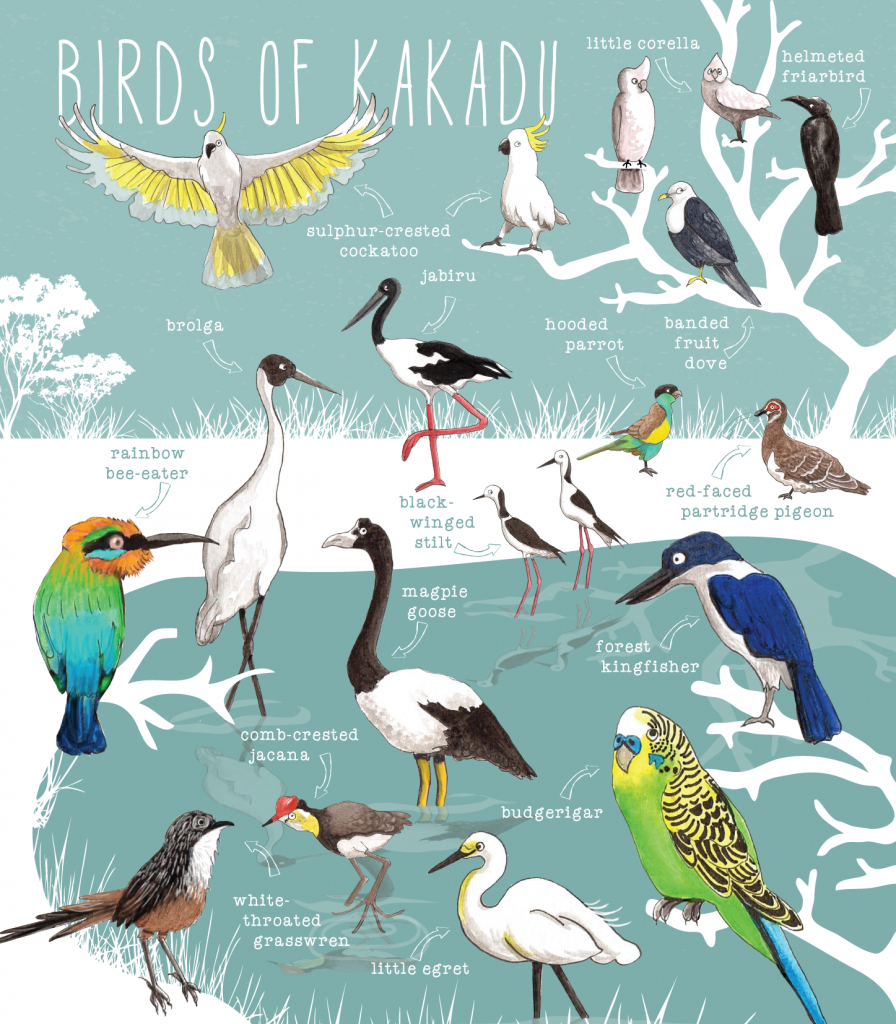 087-nt-birds-of-wetlands